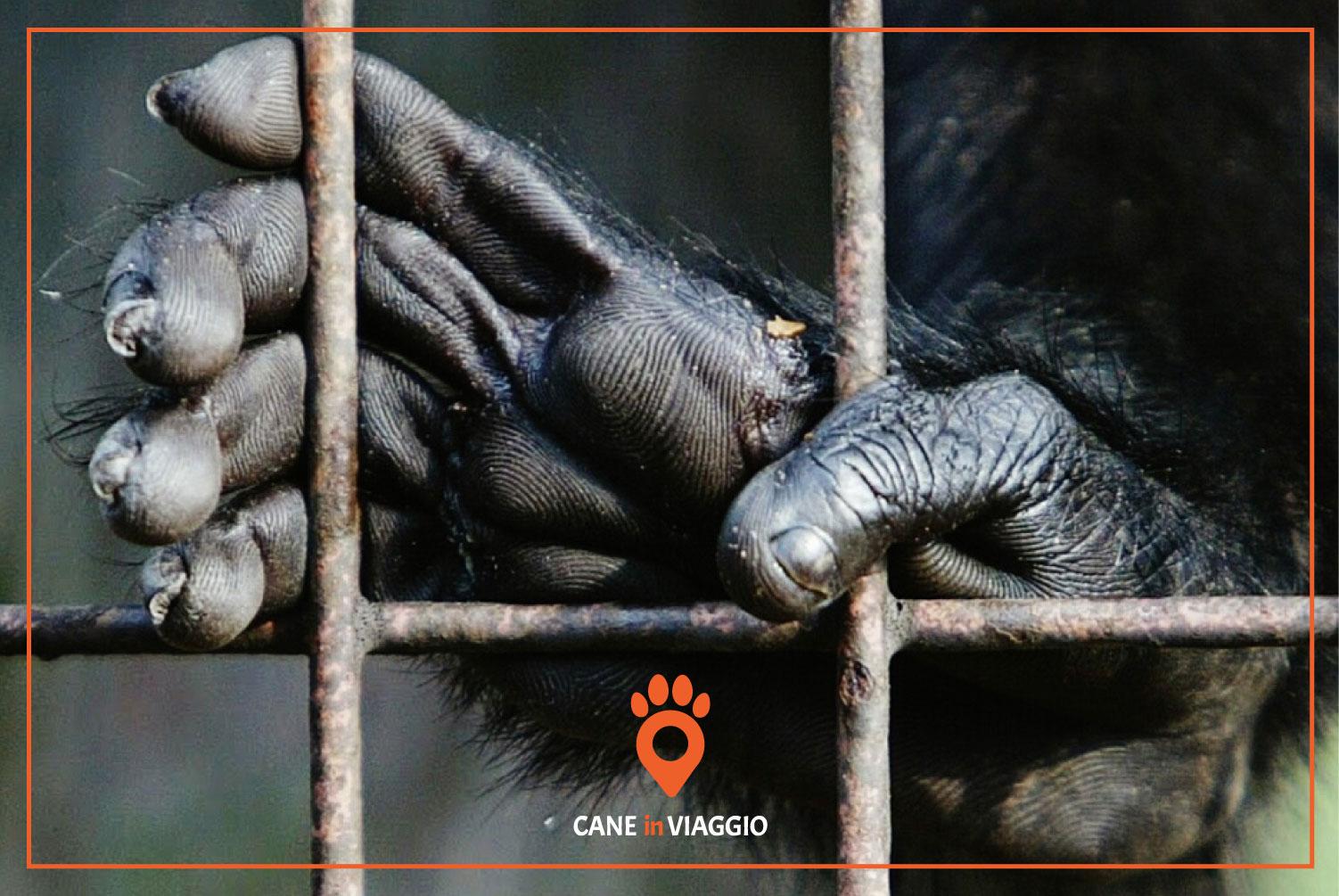 zampe di gorilla attraverso le inferriate della gabbia