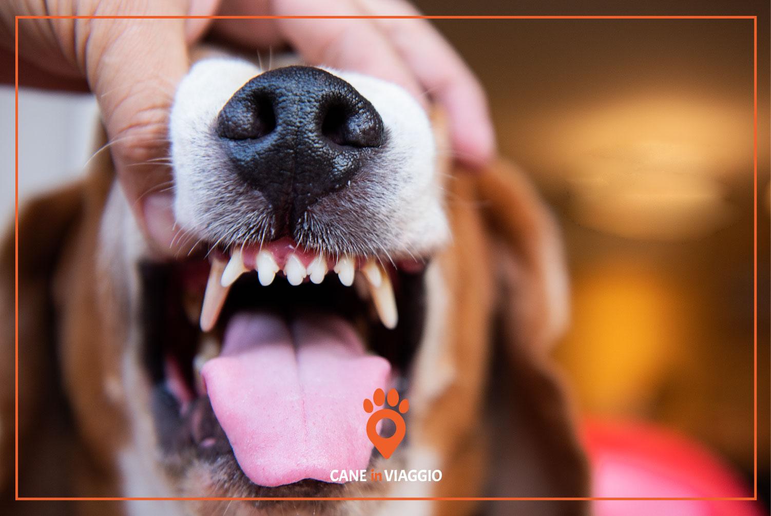 mano apre bocca al cane per sentire se ha l'alito cattivo