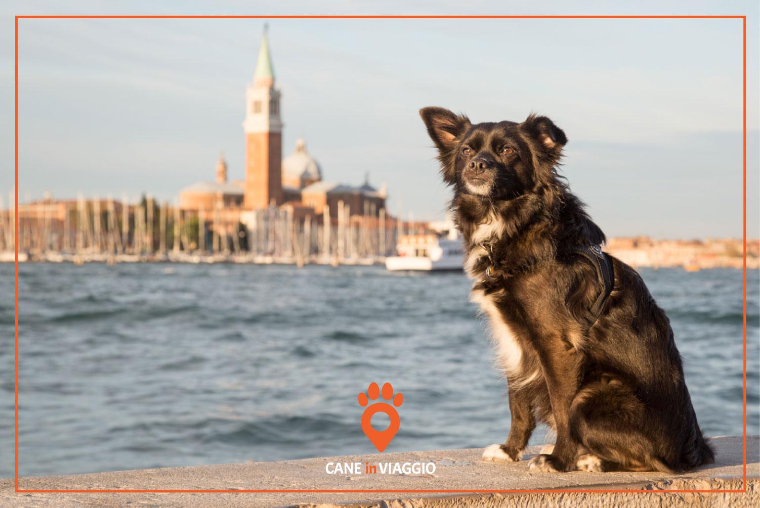 cane e città di venezia sullo sfondo