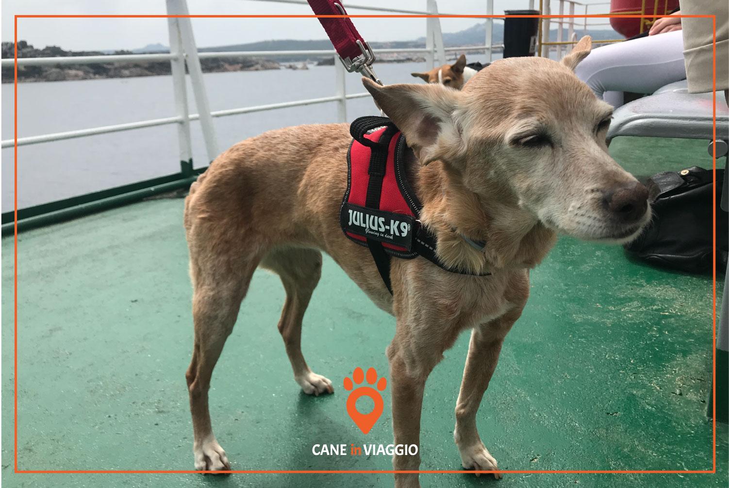 cane su una nave