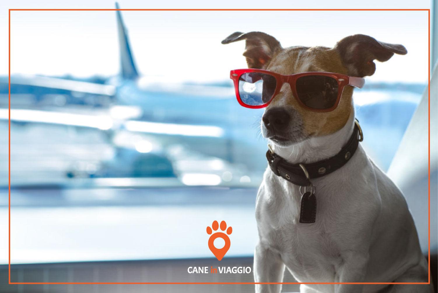 un cane in aeroporto, pronto a viaggiare per il mondo