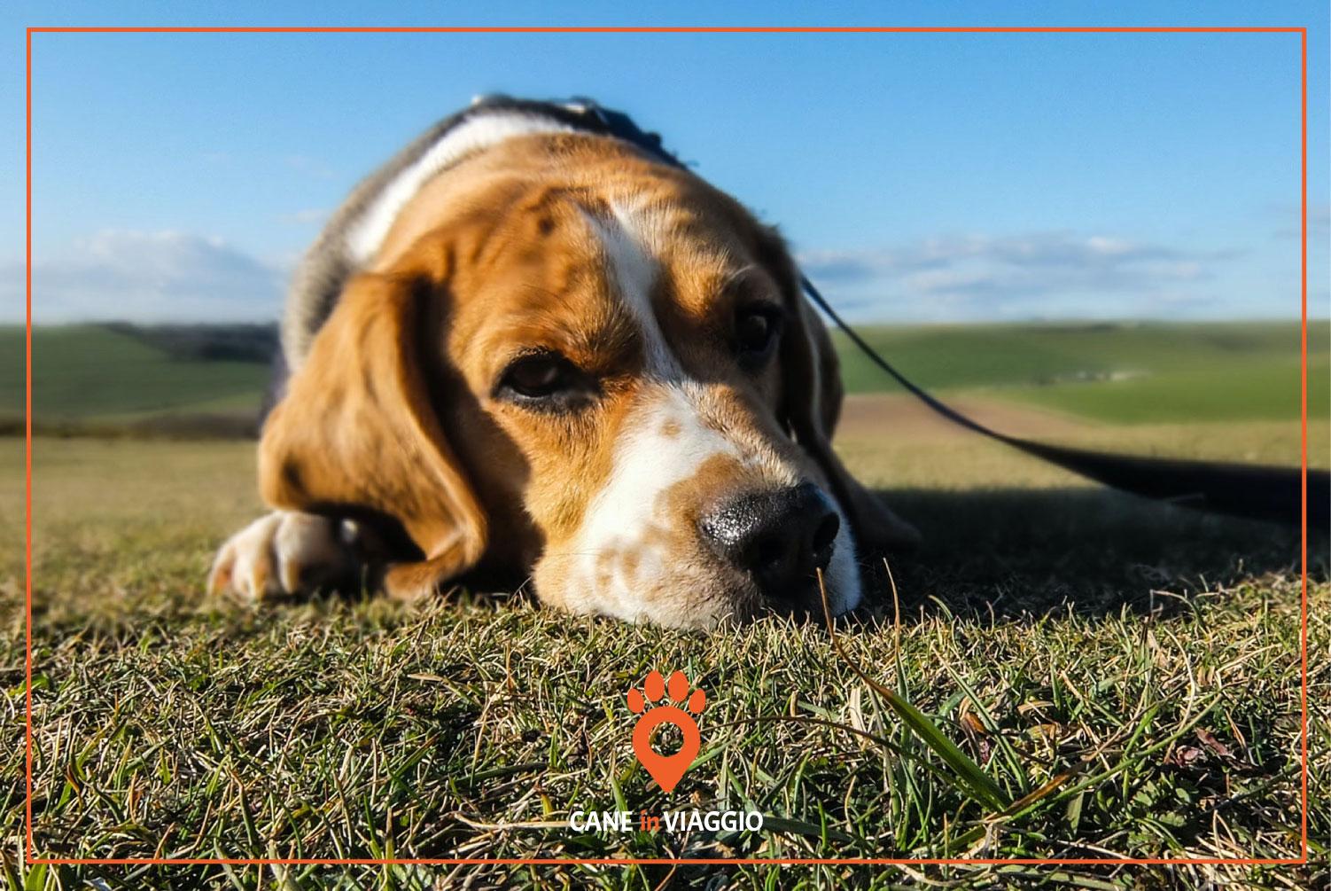 un cane abbandonato in mezzo a un prato