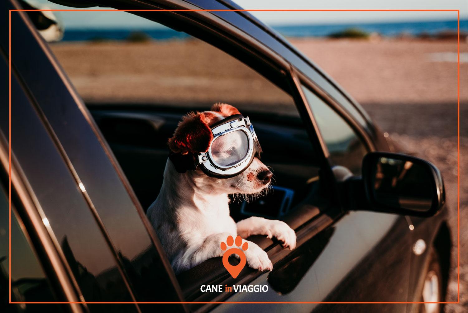 cucciolo di cane si sporge dal finestrino dell'auto