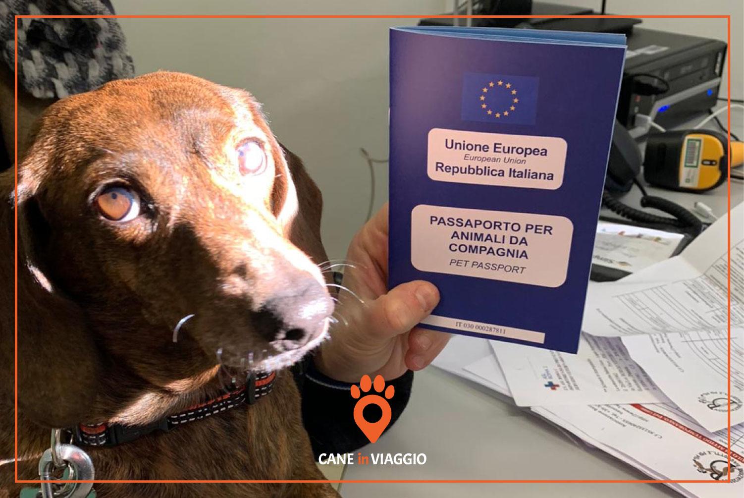 un bassotto con il suo passaporto per cani