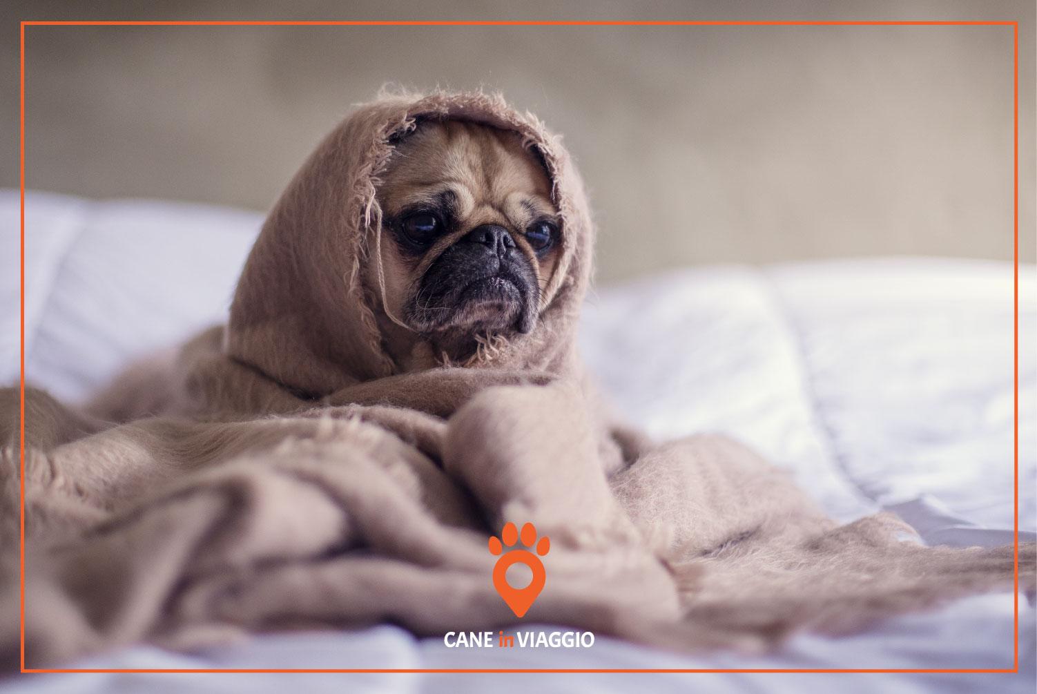 cane avvolto in una copertina con espressione d'ansia