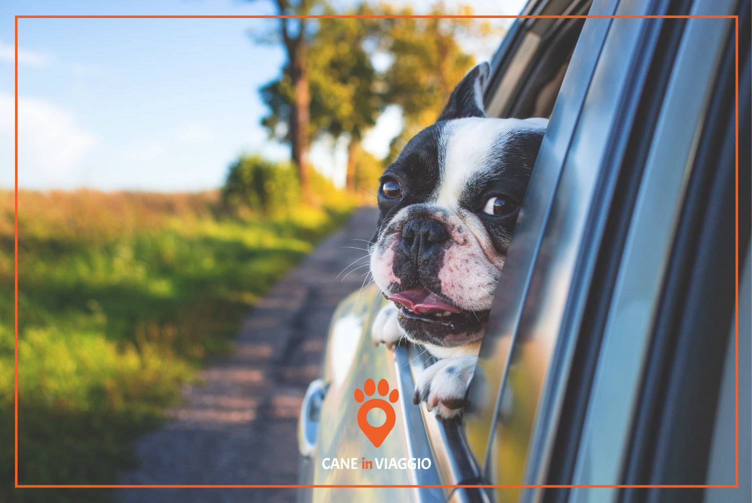 cane in macchina si sporge dal finestrino