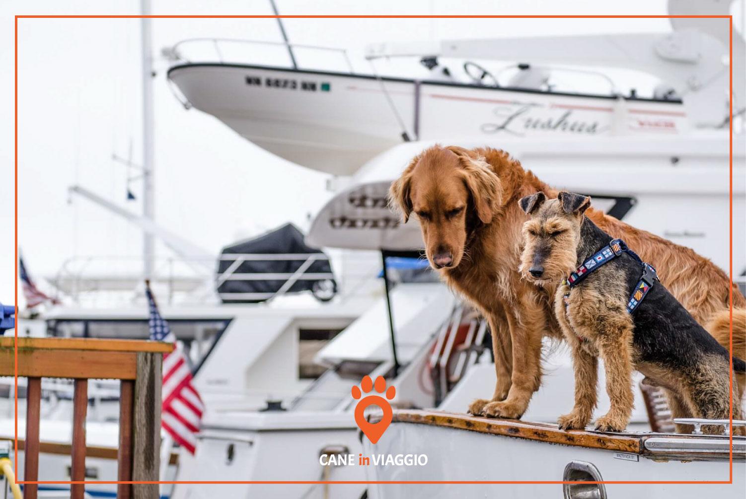 due cani a bordo di una imbarcazione