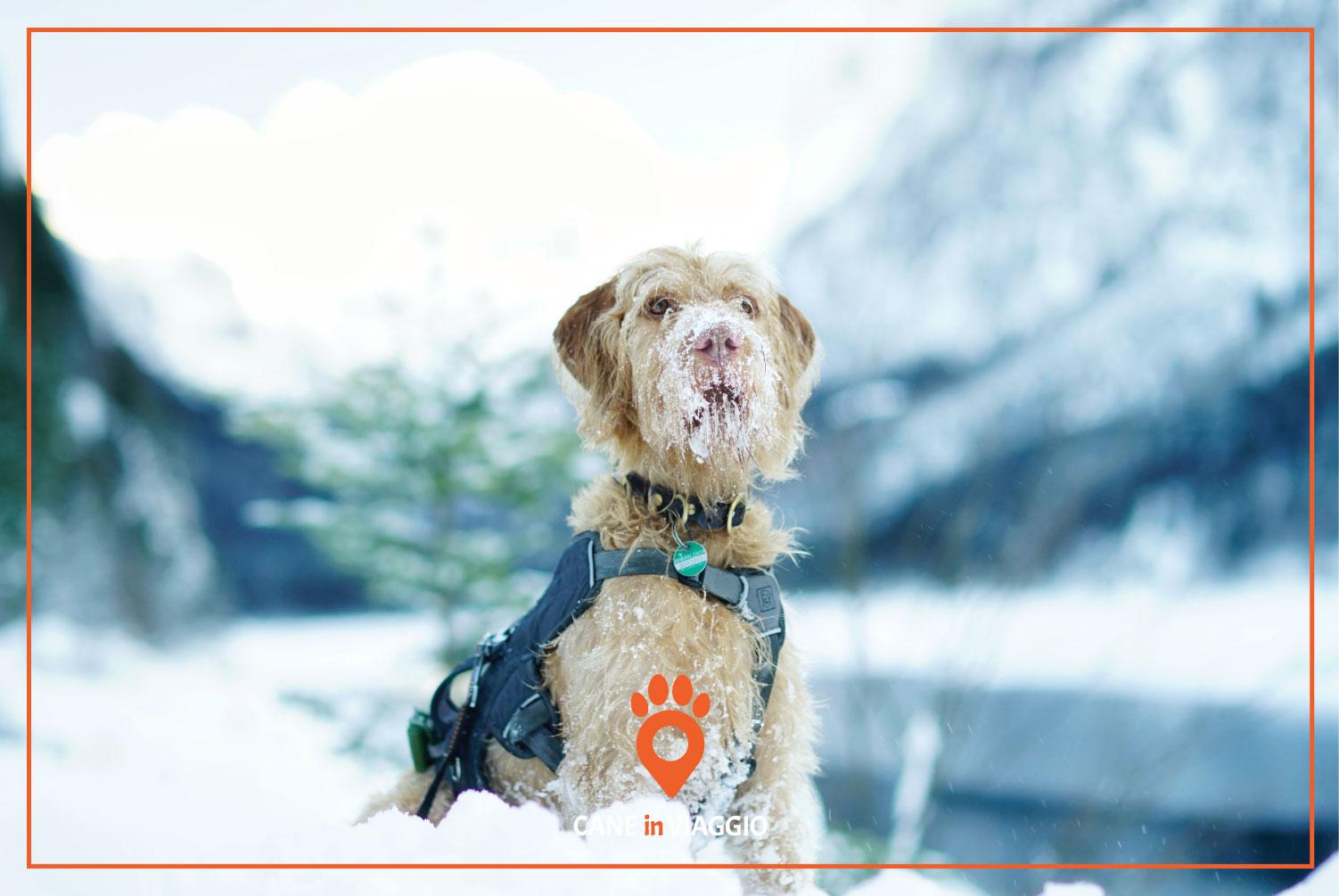 cane infreddolito sulla neve
