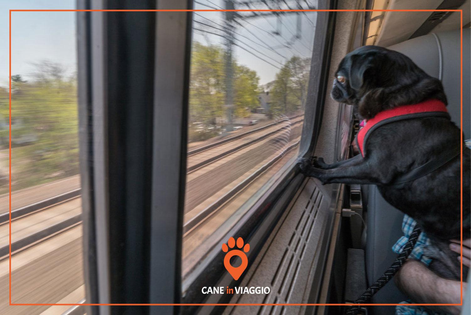 cane in treno osserva panorama al di là del finestrino