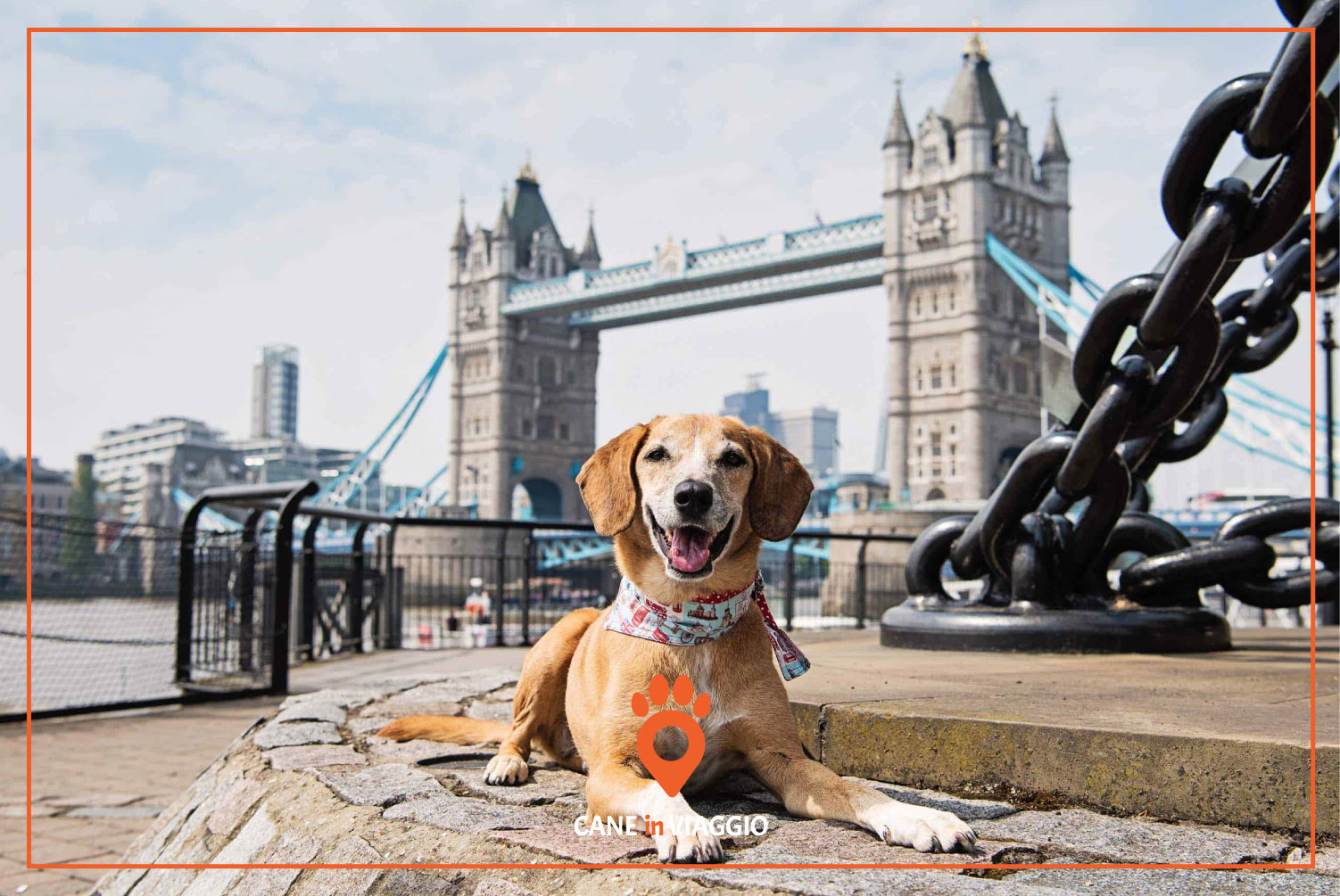 cane in viaggio all'estero a londra