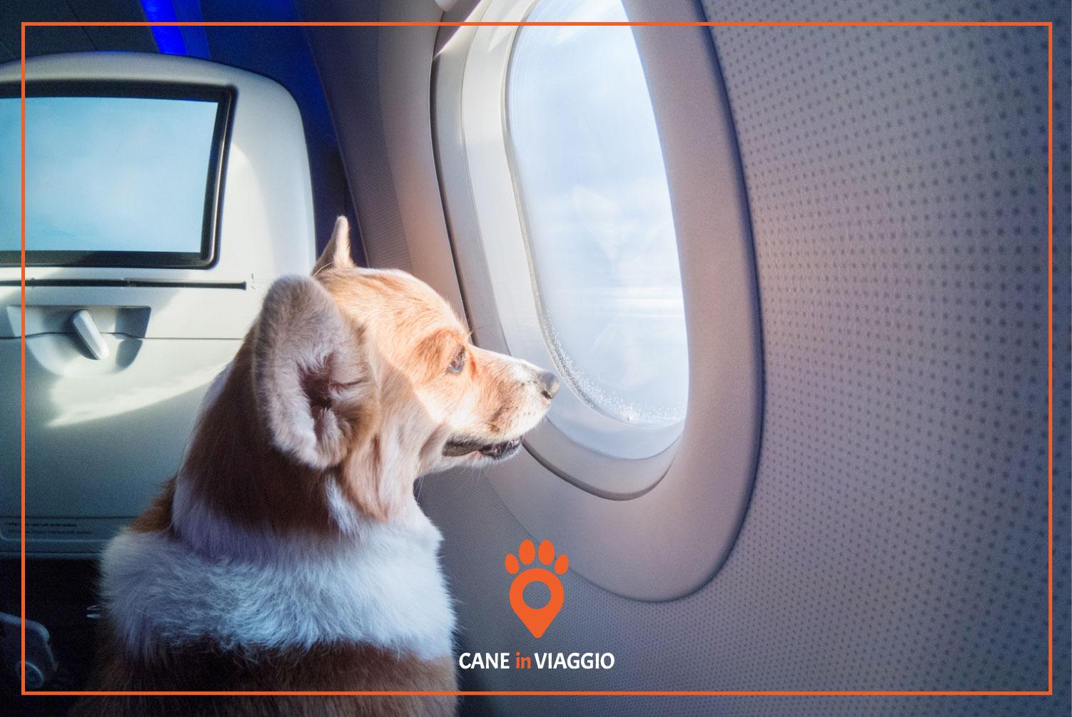 cane in aereo osserva panorama fuori dal finestrino