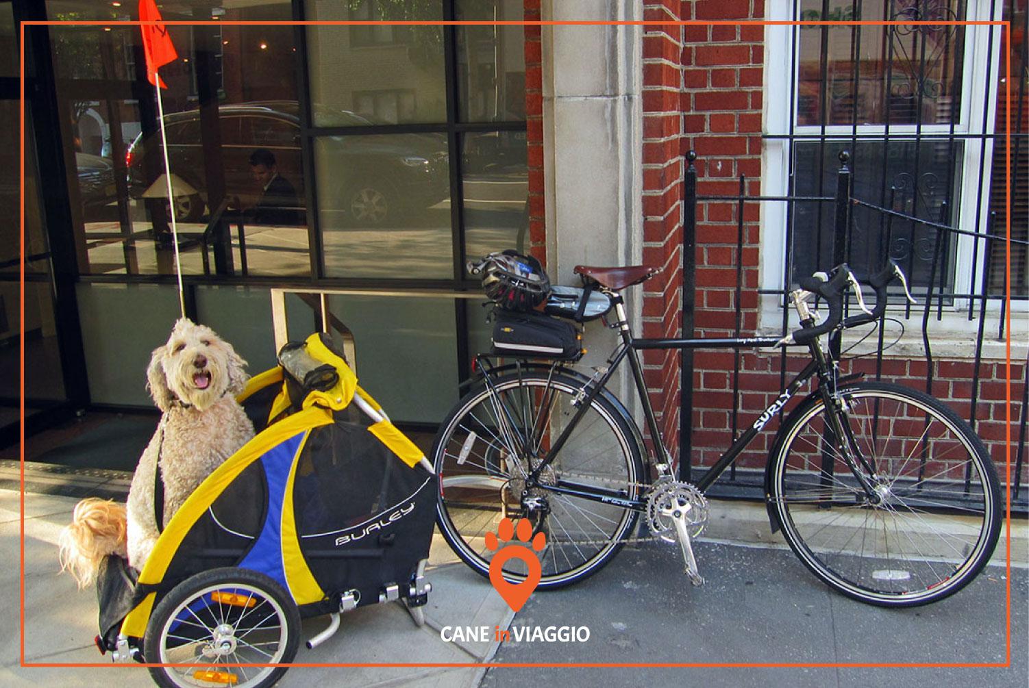 cane in bici dentro un trasportino
