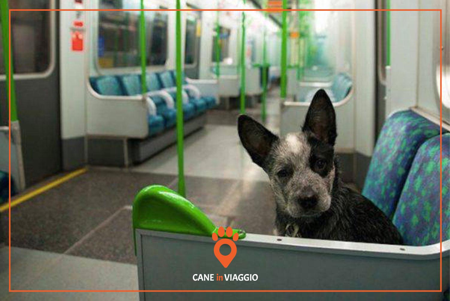cane in metropolitana seduto