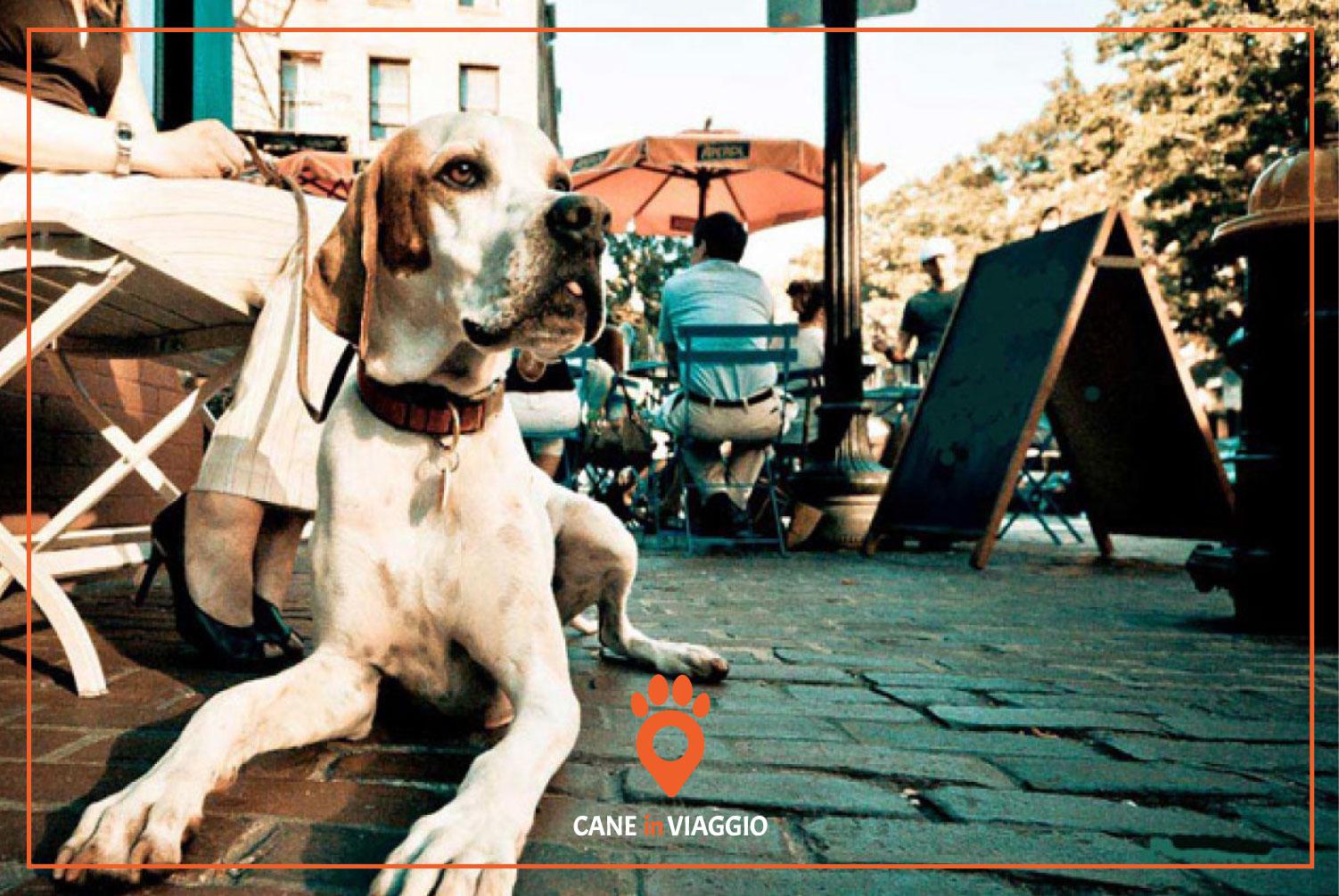 cane al ristorante seduto ai piedi del tavolo