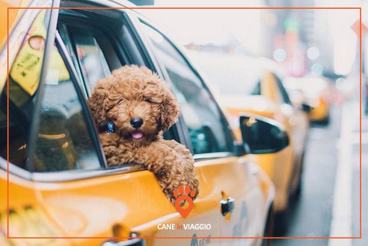 cane in taxi si sporge dal finestrino