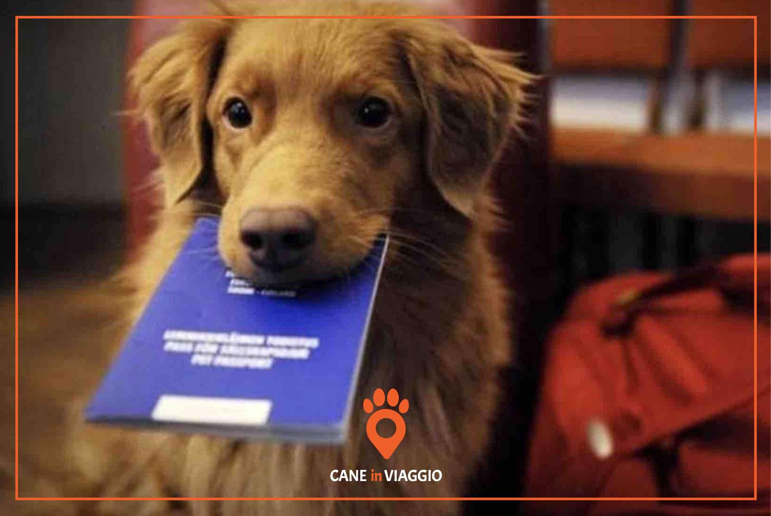 cane con documenti di viaggio