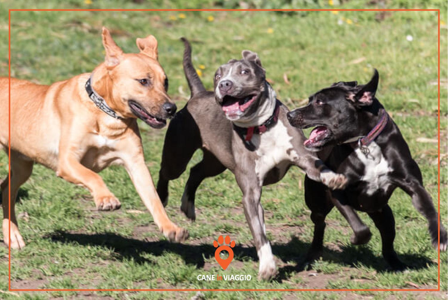 tre cani corrono e si divertono insieme