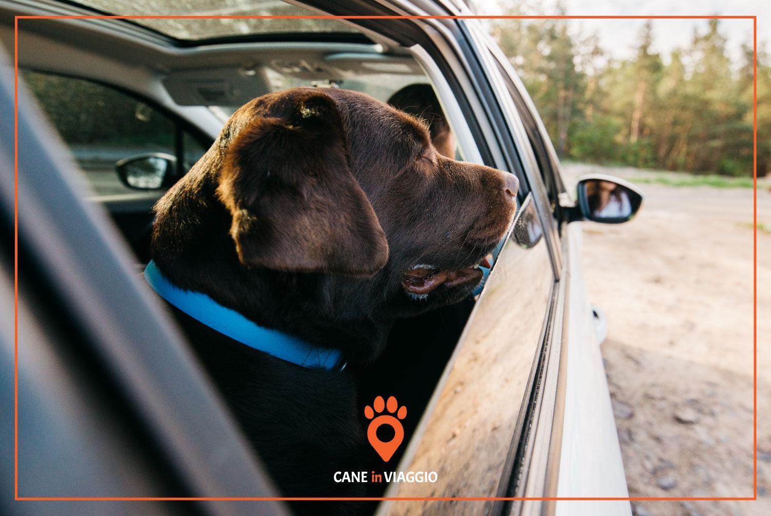 cane sul sedile del passeggero in macchina