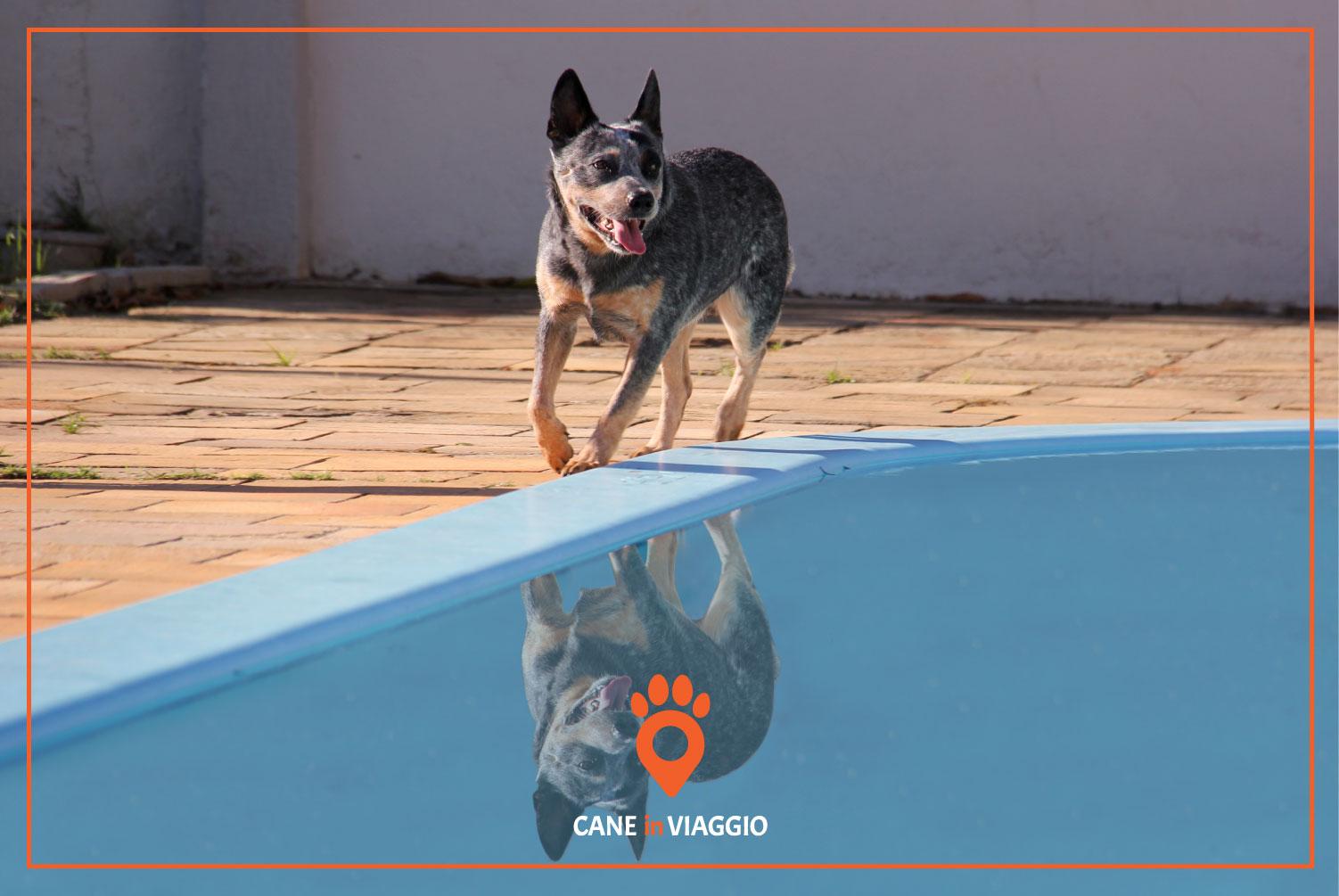 cane a bordo piscina pronto a tuffarsi