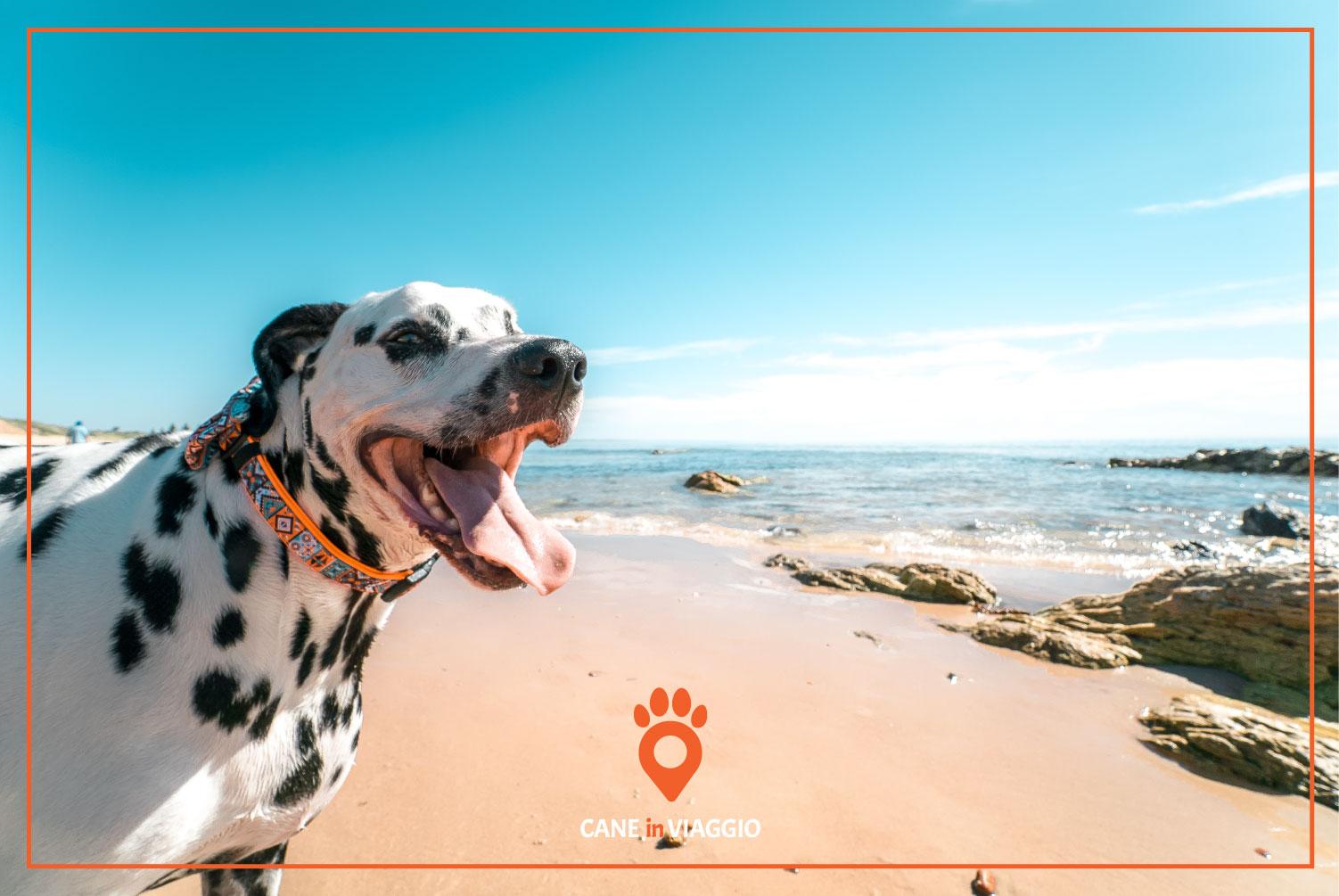 cane in riva ad una spiaggia