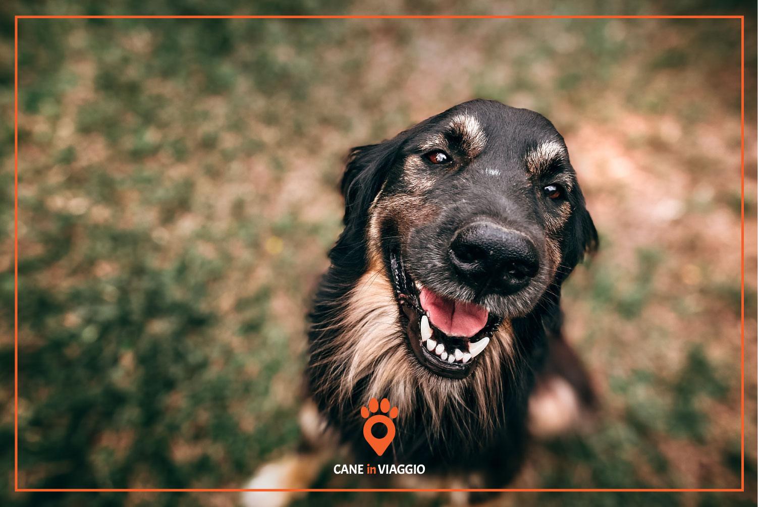 cane seduto con espressione felice
