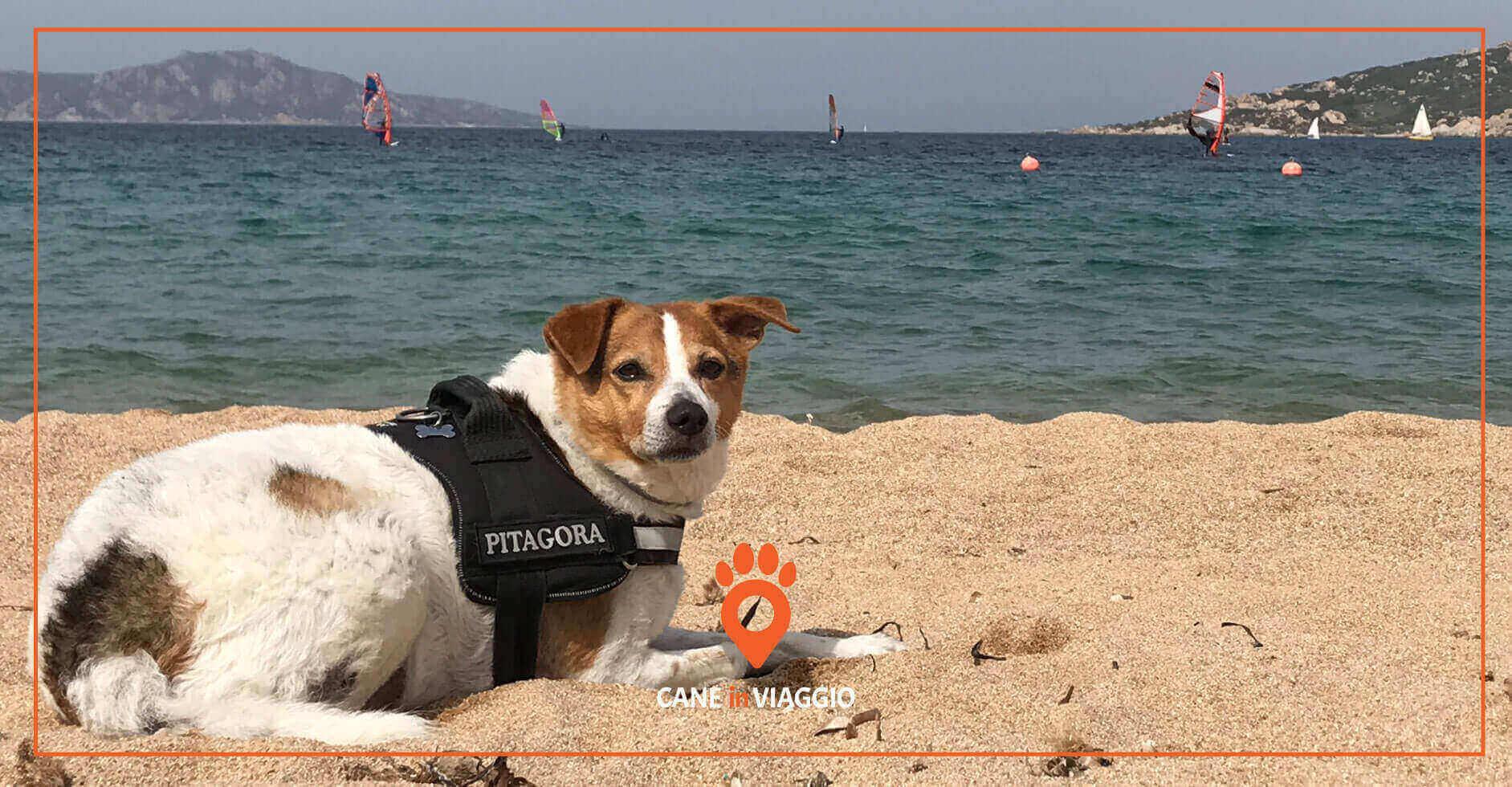 cane e spiaggia, meta di trekking in sardegna