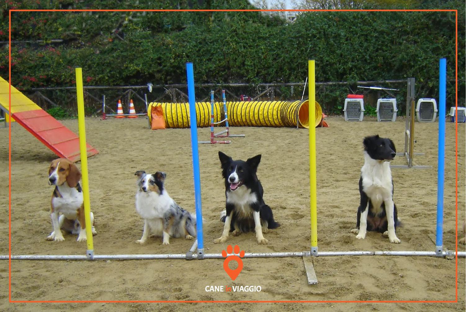 quattro cani giocano seduti in un parco giochi