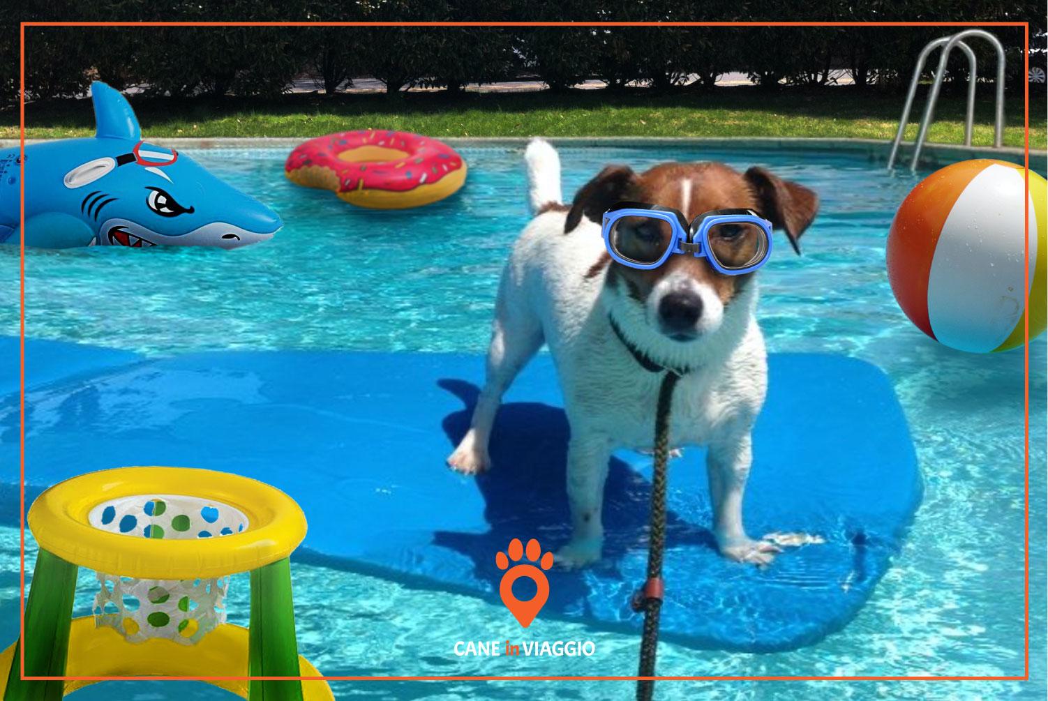 piccolo cane su un gonfiabile in piscina