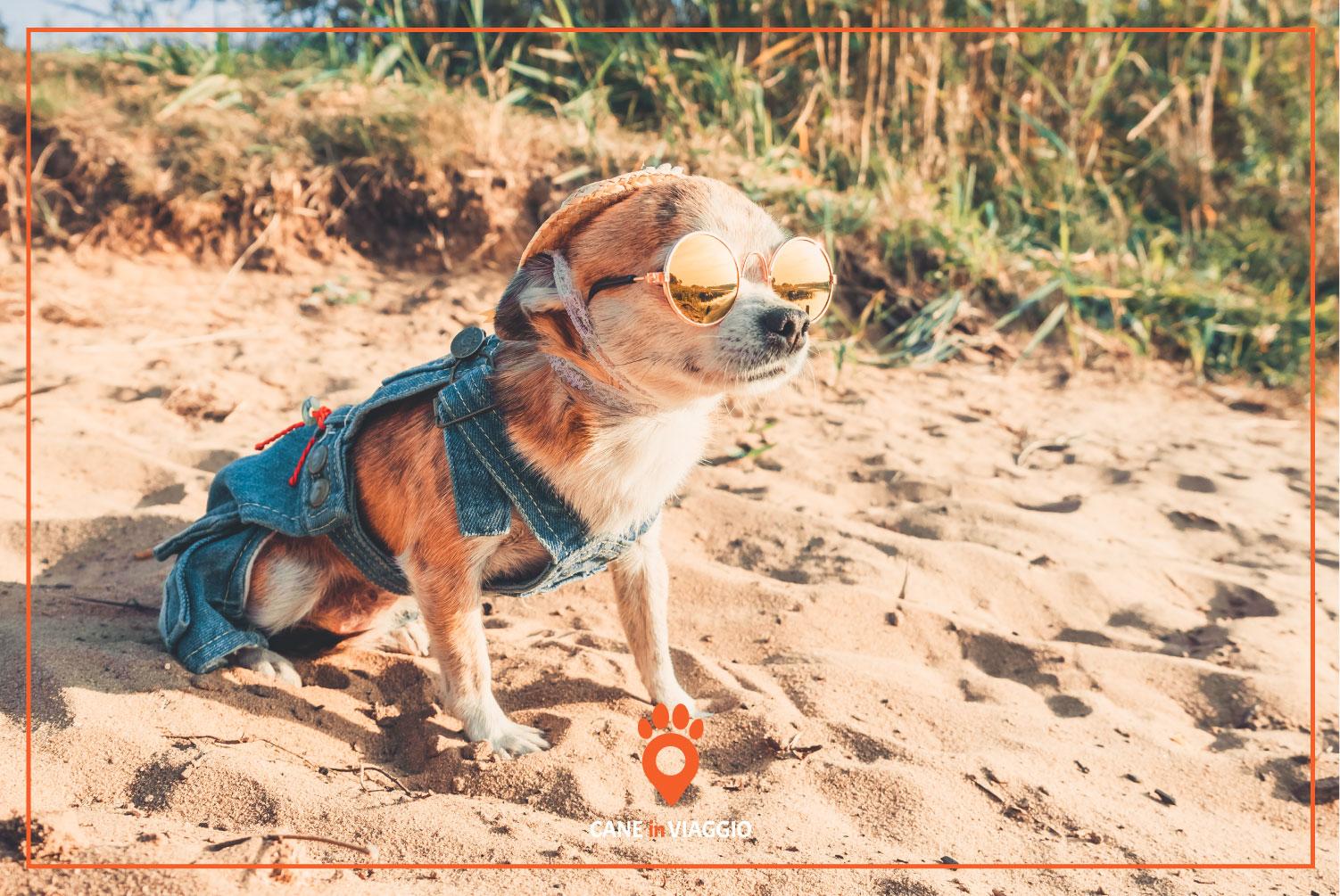 cane con occhiali da sole in riva ad una spiaggia