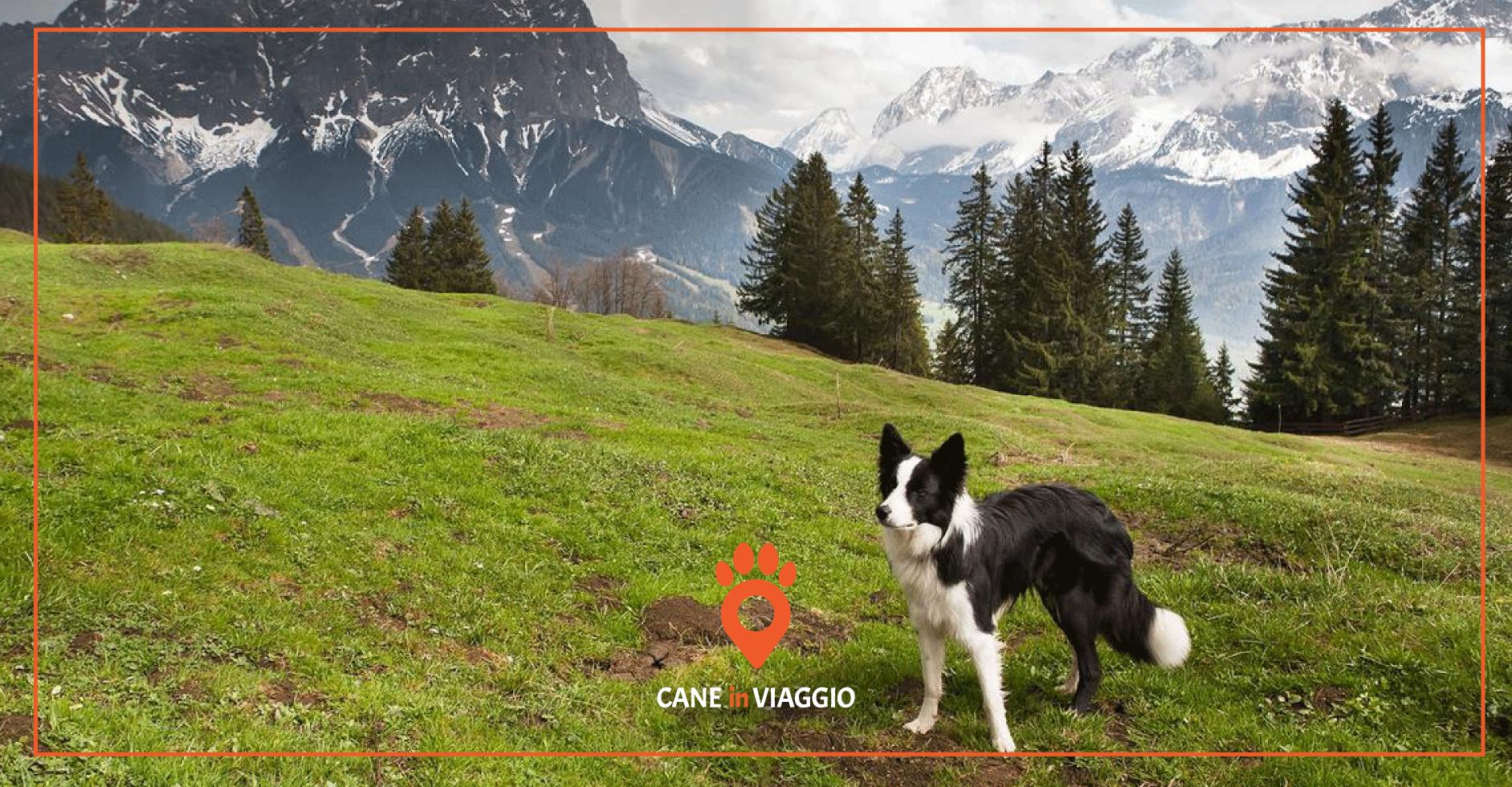 cane in montagna durante il trekking in Veneto