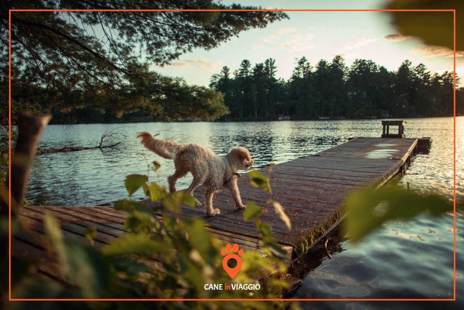 cane sul molo al lago