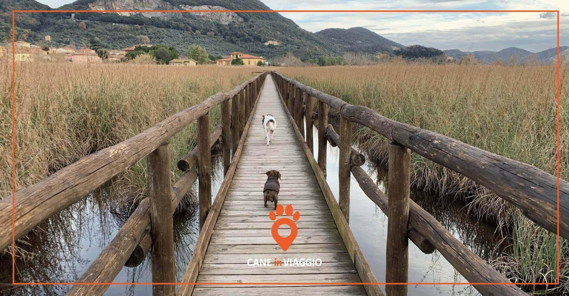 due cani percorrono un pontile facendo trekking in toscana