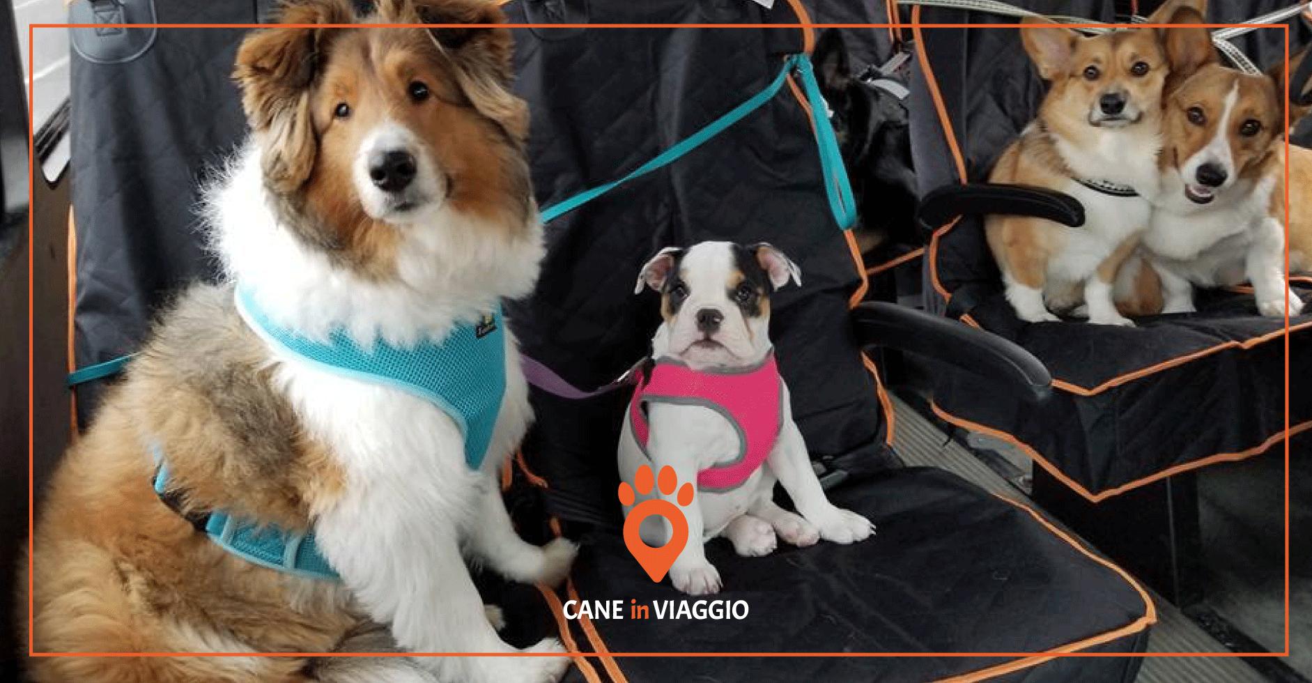 autobus_a_lunga_percorrenza cani