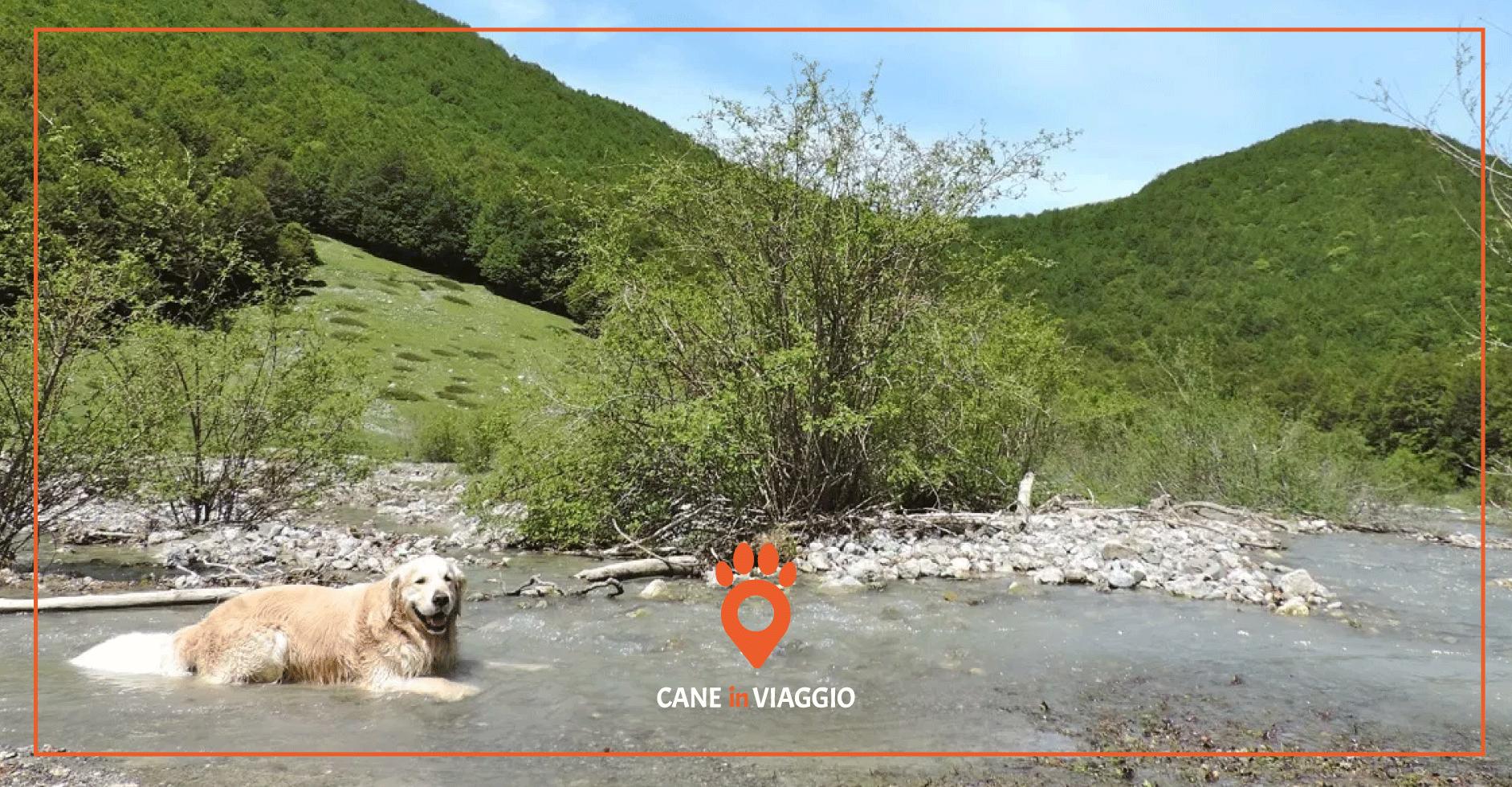 cane si rilassa in acqua durante il trekking in Basilicata