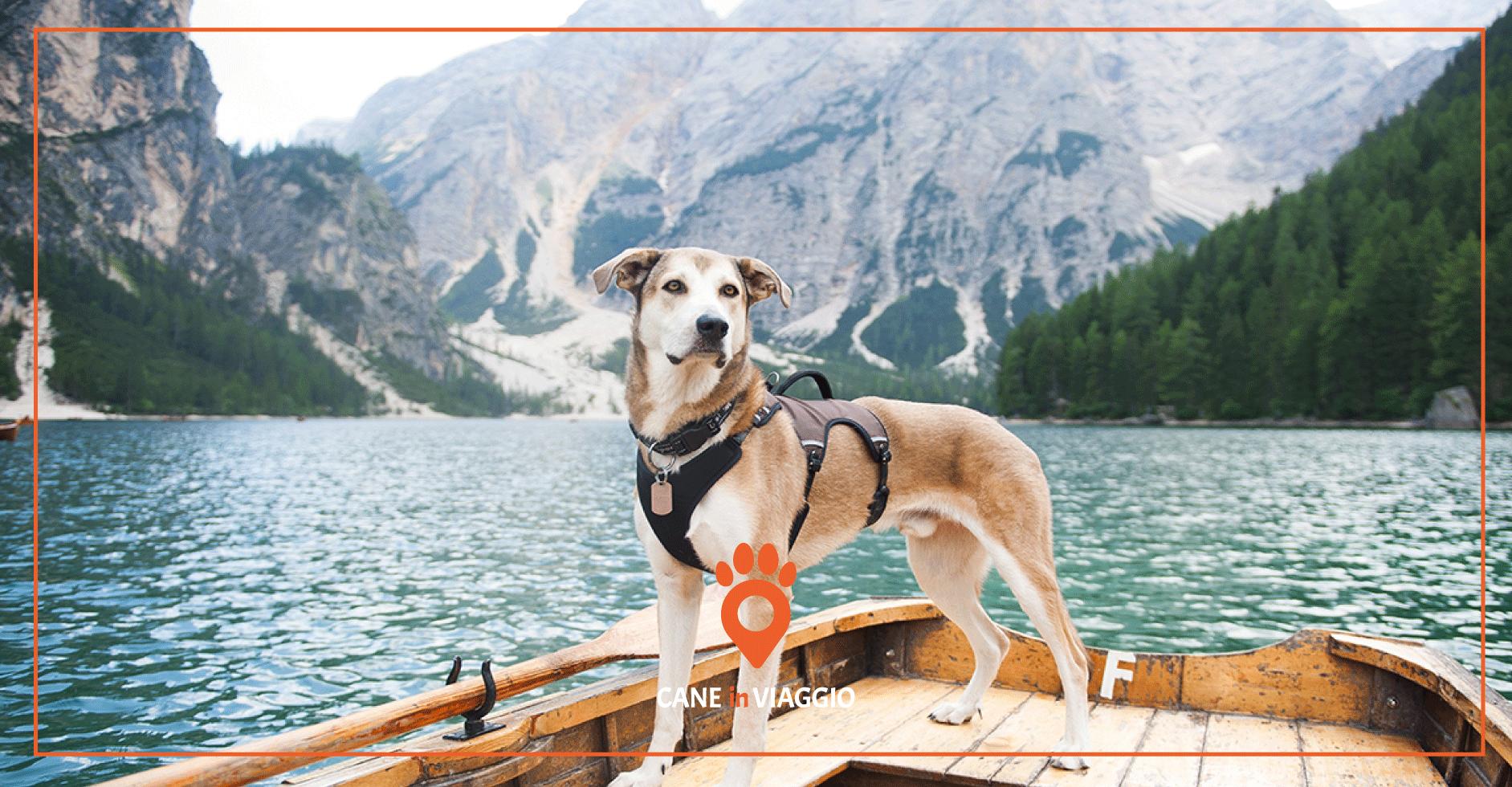 cane in piccola imbarcazione durante il trekking in Trentino