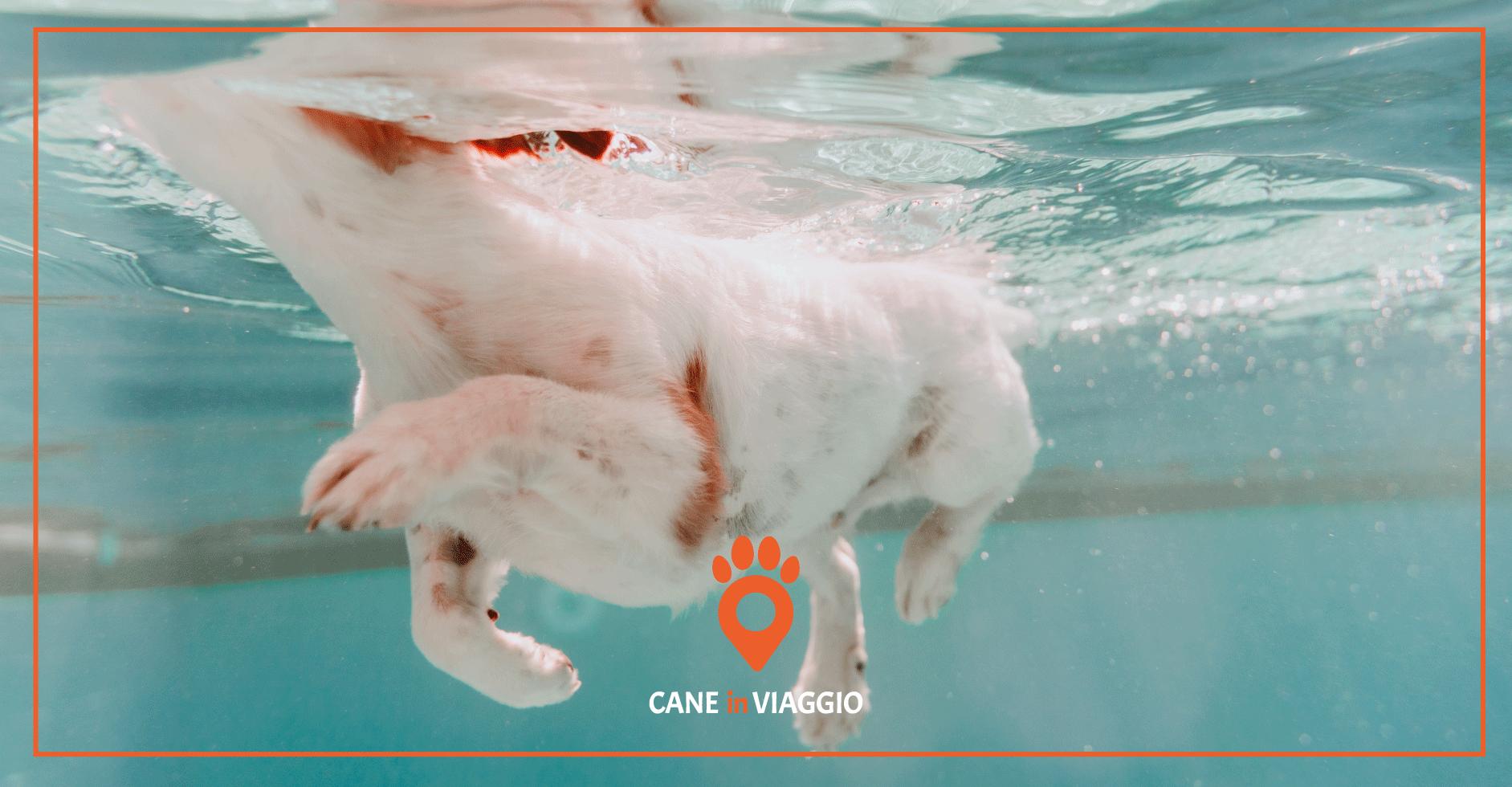 cane_piscina_Milano