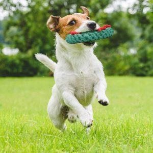 2 Giocattoli Masticare per Cani Natale